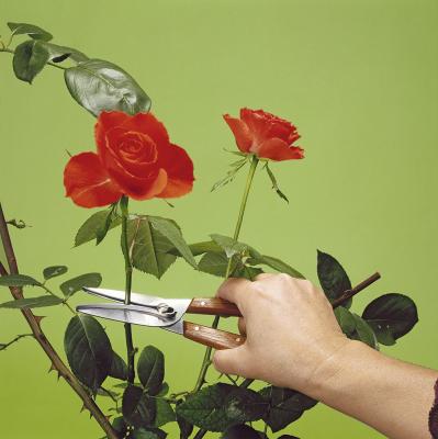 Victorinox 6.5009 Çiçek & Üzüm Toplama Makası - Thumbnail