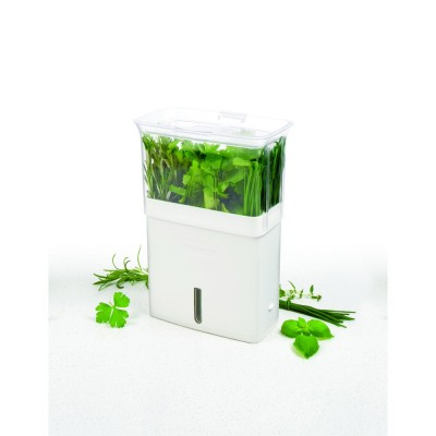 Cole & Mason H105159 Bölmeli Yeşillik Saklama Kabı